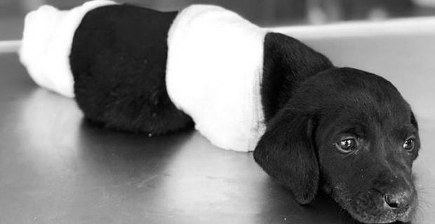 Sapanca'da bacakları kesilen köpeğin ardından farklı bir vahşetin görüntüleri ortaya çıktı!