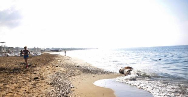 Antalya'da sahile inek leşi vurdu