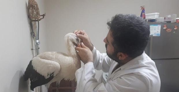 Mehmetçik'in Afrin'de bulduğu hasta leylek tedavi edilecek