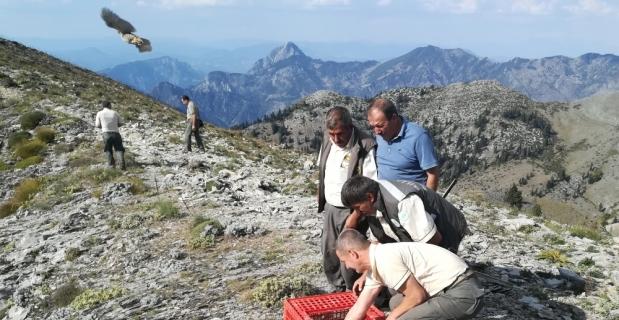 Düldül Dağı'na bin keklik salındı