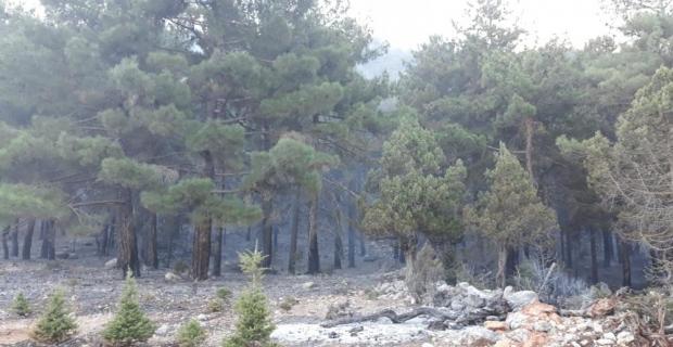 GÜNCELLEME - Adana'da orman yangını