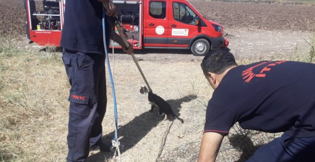 Kahramanmaraş'ta kedi kurtarma operasyonu