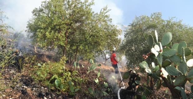 Kozan'da zeytinlik alanda yangın