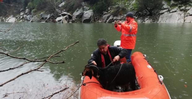 Kayalıklarda mahsur alan keçiler kurtarıldı