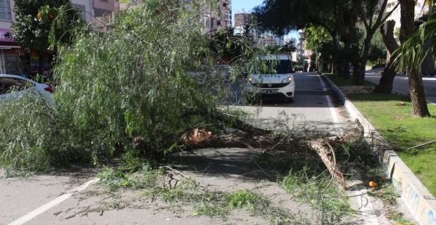 Üzerine ağaç devrilen araçta hasar oluştu