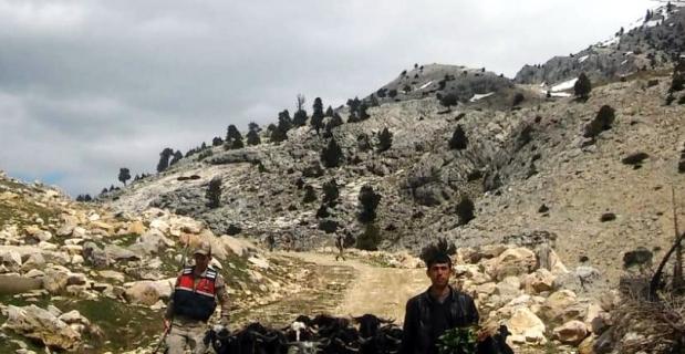 Kahramanmaraş'ta ahırdan kaçan keçiler, güvenlik kameralarına yakalandı