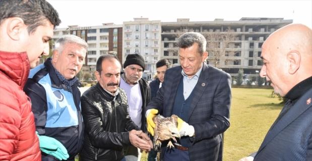Kahramanmaraş'ta yaralı bulunan şahin tedavi altına alındı