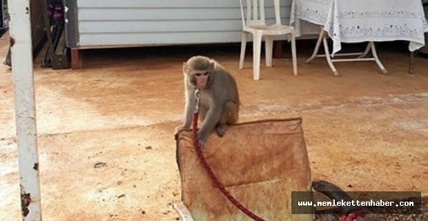 Antalya'da evinde maymun ve keklik besleyen kişiye ceza kesildi