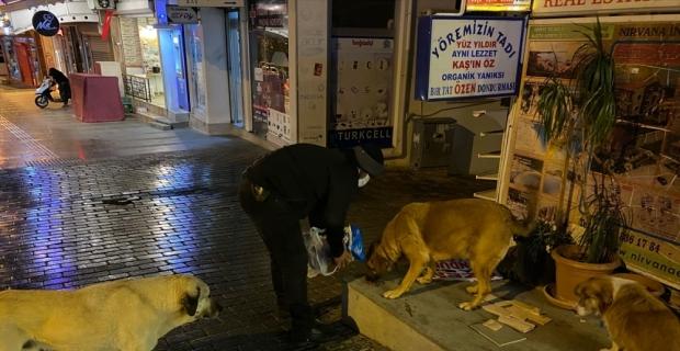 Antalya'da sokağa çıkma kısıtlamasında sokak hayvanları unutulmadı