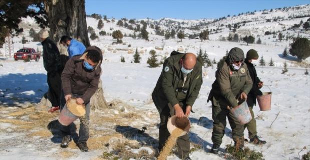 Erdemli'de yaban hayvanları için doğaya yem bırakıldı