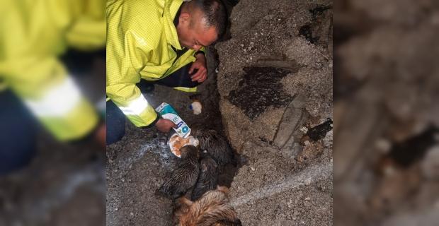 Hatay'da yağmur sularıyla dolan dere yatağında mahsur kalan köpek ve 4 yavrusu kurtarıldı