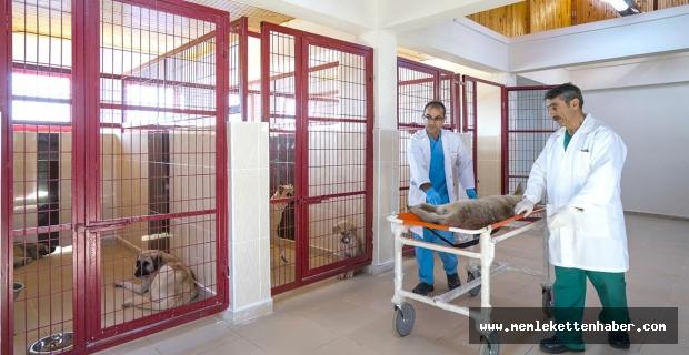 Malatya'da 1125 sokak hayvanına bakım yapıldı