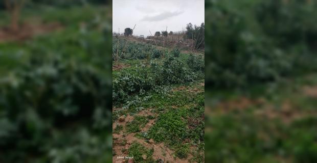 Mersin'de dolu yağışı 600 dekar tarım arazisine zarar verdi