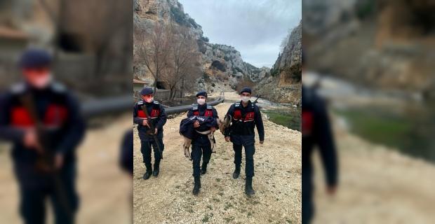 Mersin'de jandarmanın bulduğu yaban keçisi yavrusu doğaya salınacak