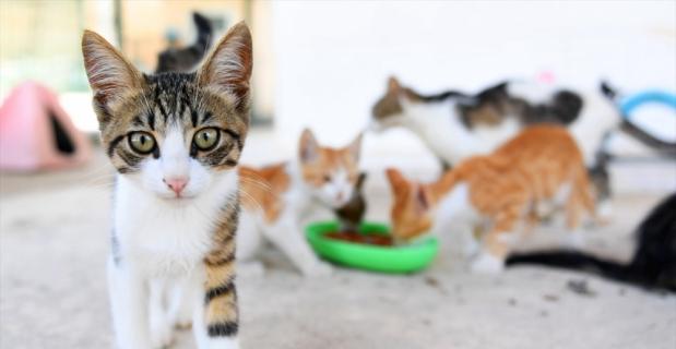 Mersin'deki Kaşlı Geçici Hayvan Bakımevi salı günleri ziyarete kapalı olacak