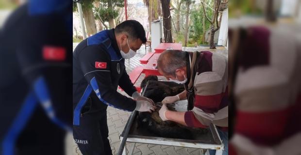 Mut'ta yaralı köpek tedavi altına alındı
