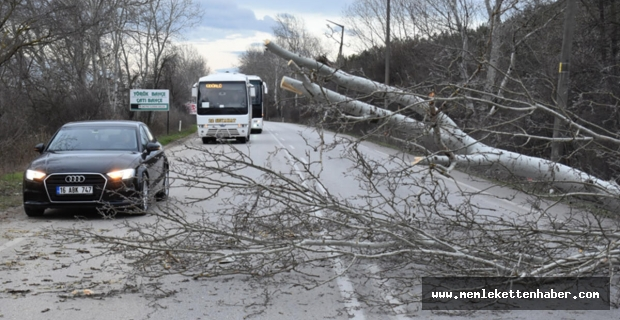 Silifke'de fırtına nedeniyle karayoluna devrilen ağaç trafiği aksattı
