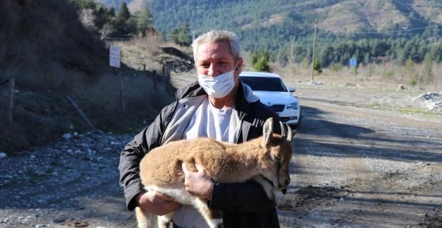 Adana'da bitkin halde bulunan dağ keçisi yavrusu bakıma alındı