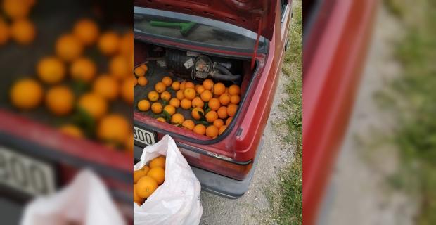 Adana'da bahçeden portakal çalma teşebbüsündeki kişi yakalandı