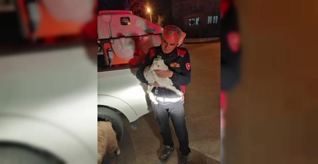 Burdur'da dereye düşen küçükbaş hayvanlar itfaiye ekiplerince kurtarıldı