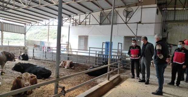 Samandağ Kaymakamı Murat Kütük büyükbaş hayvan işletmesini ziyaret etti
