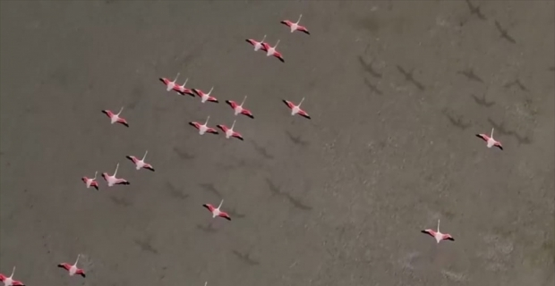Yarışlı Gölü'ndeki flamingolar drone ile görüntülendi