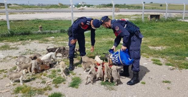 Adana'da jandarma sokak hayvanlarını unutmadı