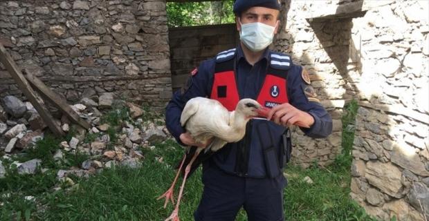 Burdur'da yaralı bulunan leyleği jandarma kurtardı