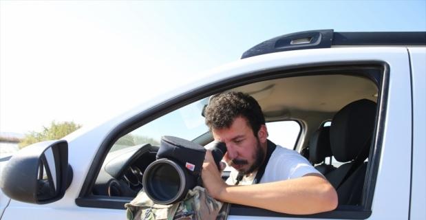 Kıyı balıkçılı kuşu, Türkiye'de ilk kez Hatay'da kayıt altına alındı