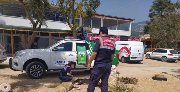 Mersin'in Silifke ilçesinde, jandarma sokak hayvanlarını besledi