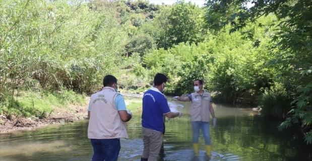 Osmaniye'de görülen toplu balık ölümleri nedeniyle inceleme başlatıldı