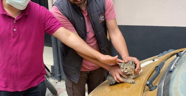 Osmaniye'de otomobilin motor bölümünde sıkışan kedi yavrusunu itfaiye kurtardı