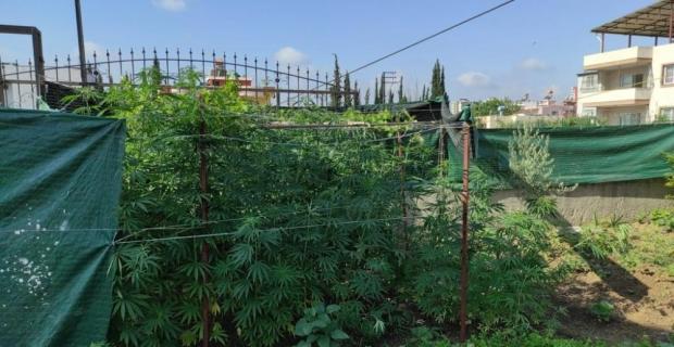 Adana'da evinde uyuşturucu yetiştiren zanlı yakalandı