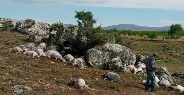 Burdur'da yıldırım isabet eden 23 koyun telef oldu