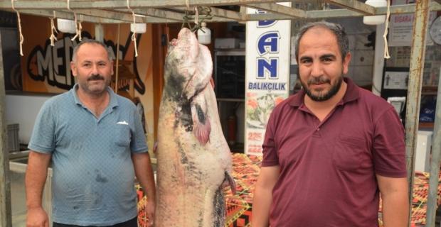Kahramanmaraş'ta baraj göletinde 130 kilogramlık yayın balığı yakalandı