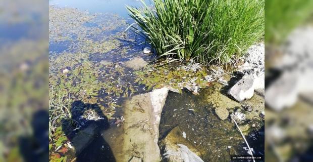 Elbistan'da balık ölümlerinin nedeni belli oldu