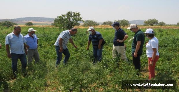 FAO koordinatörleri projeleri inceledi