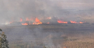 Antalya'nın Kaş ilçesinde sazlık alanda çıkan yangın kendiliğinden söndü