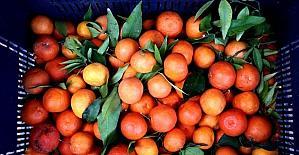 Yaş meyve sebzede 2020'nin ihracat şampiyonu Mersin oldu