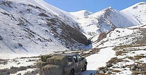 Kaçak avcılıkla mücadele ve besin desteği, yaban keçisi popülasyonunu artırdı