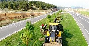 Kahramanmaraş'ta ağaçlandırma çalışmaları