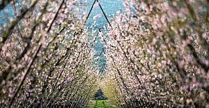 Amanos Dağları'nın ilkbahar renkleri, kartpostallık görüntüler oluşturdu