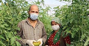 Mersin'de yetiştirilen yerli domates talep görüyor