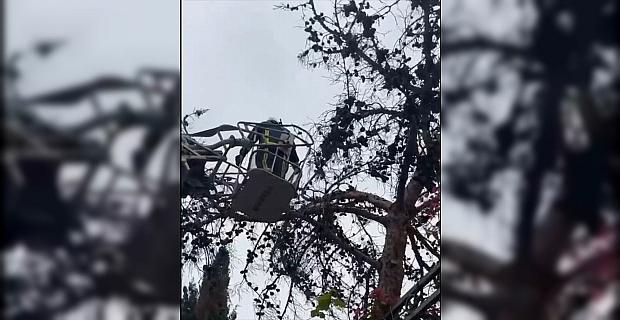 Antalya'da ağaçta mahsur kalan kediyi itfaiye kurtardı