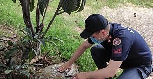 Adana'da yaralı caretta caretta tedavi altına alındı