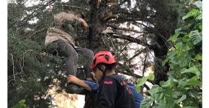 Budama yapmak için çıktığı ağaçta fenalaştı itfaiye ekipleri kurtardı