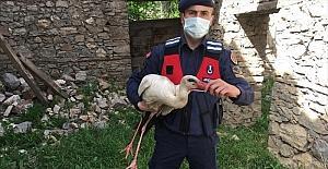 Burdur'da yaralı bulunan leyleği jandarma...