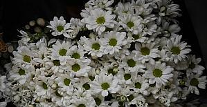 Çukurova'daki çiçek mezatlarında Anneler Günü yoğunluğu