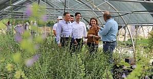 Hatay'daki EXPO 2021 seralarında aylık 20 bin süs bitkisi yetiştiriliyor
