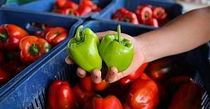 Türkiye'nin yaş sebze meyve üssü Antalya'da,